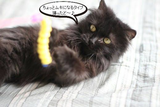 黒猫長毛さん_e0151545_21165885.jpg