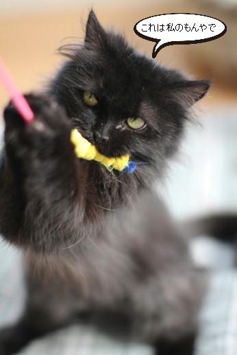 黒猫長毛さん_e0151545_21170734.jpg