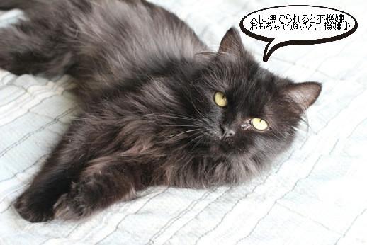 黒猫長毛さん_e0151545_21171792.jpg