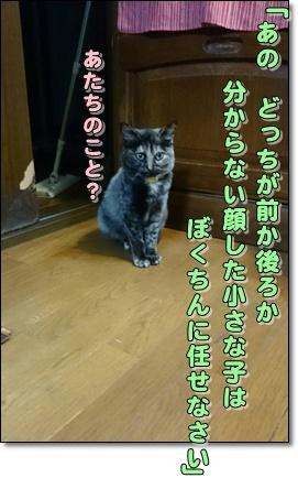 b0151748_12175830.jpg