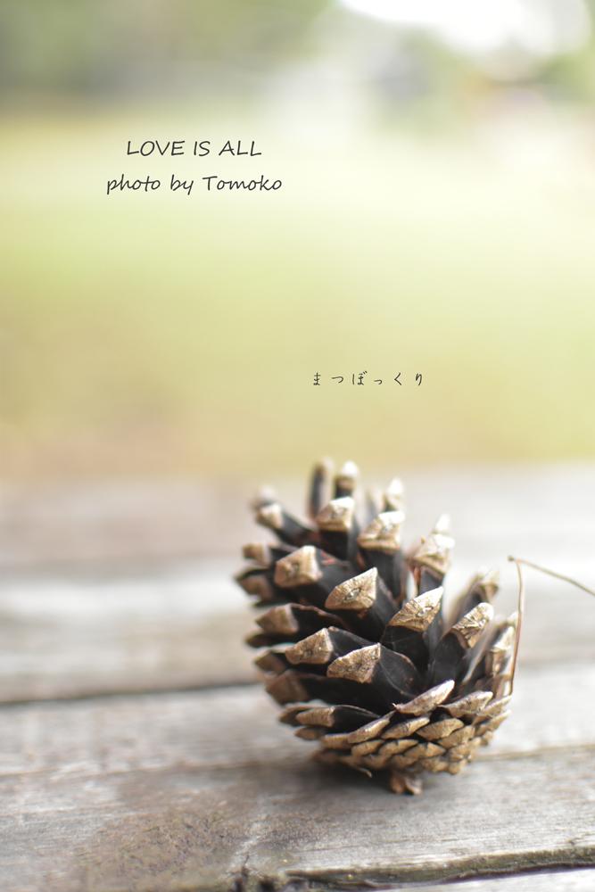 バセンジーオフ会 ☆ポムの森☆_c0345348_22560899.jpg