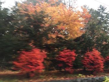 秋が冬に変わるとき_c0113755_02441137.jpg