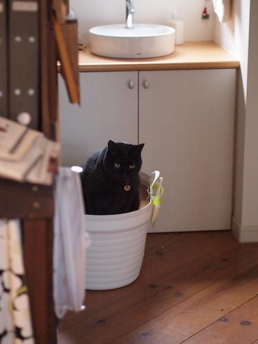 においが気になる?我が家の猫のトイレは・・_a0335560_14313379.jpg