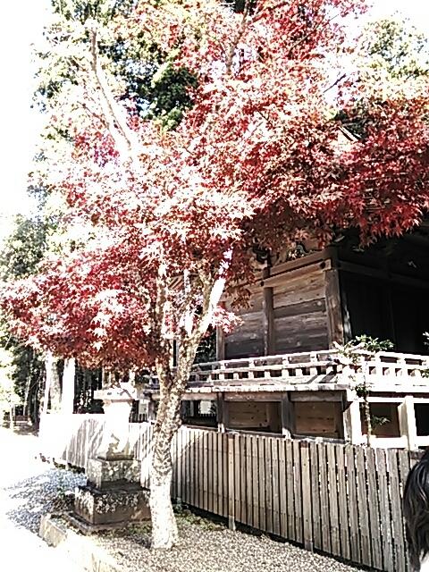 鹿島神社から佐倉へ_c0206366_08421504.jpg