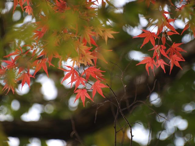 佐倉城址公園の紅葉・・・  E-3 と stylus 1s の試写+α (11/29)_b0006870_2162662.jpg