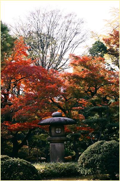 東京の秋 -3_b0340572_11474042.jpg