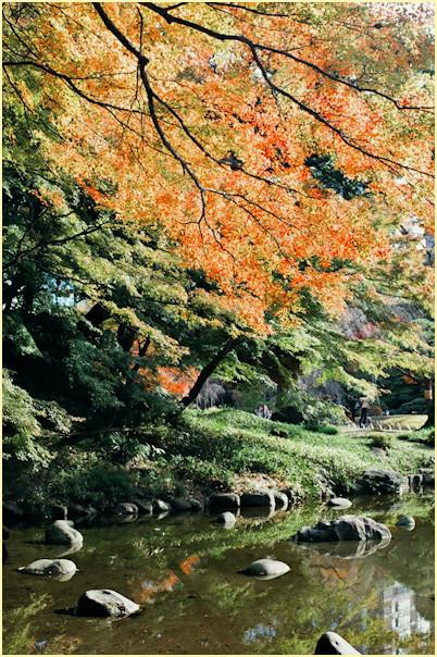 東京の秋 -3_b0340572_11475198.jpg