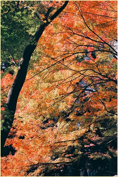 東京の秋 -3_b0340572_11482075.jpg