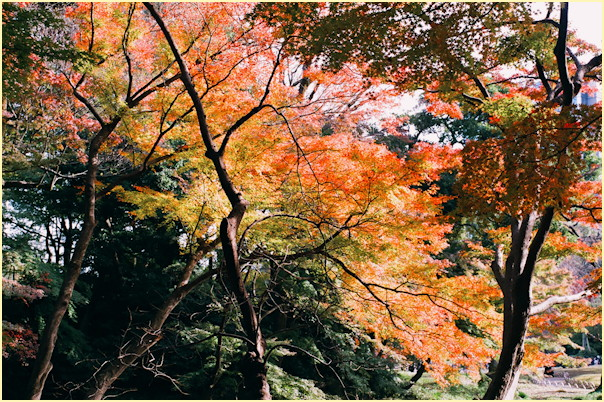 東京の秋 -3_b0340572_11483427.jpg