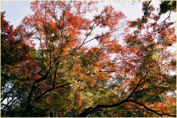 東京の秋 -3_b0340572_11484639.jpg