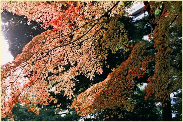 東京の秋 -3_b0340572_11494854.jpg