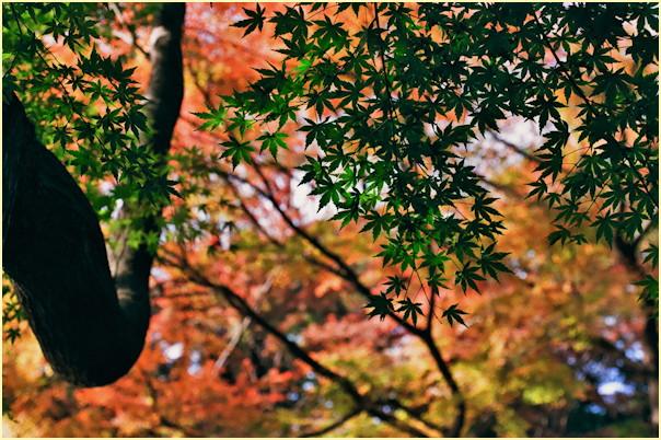 東京の秋 -3_b0340572_1150149.jpg
