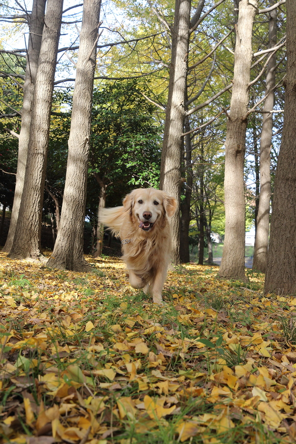 根岸森林公園と三渓園_b0275998_1045761.jpg