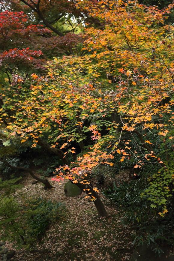 根岸森林公園と三渓園_b0275998_10495015.jpg