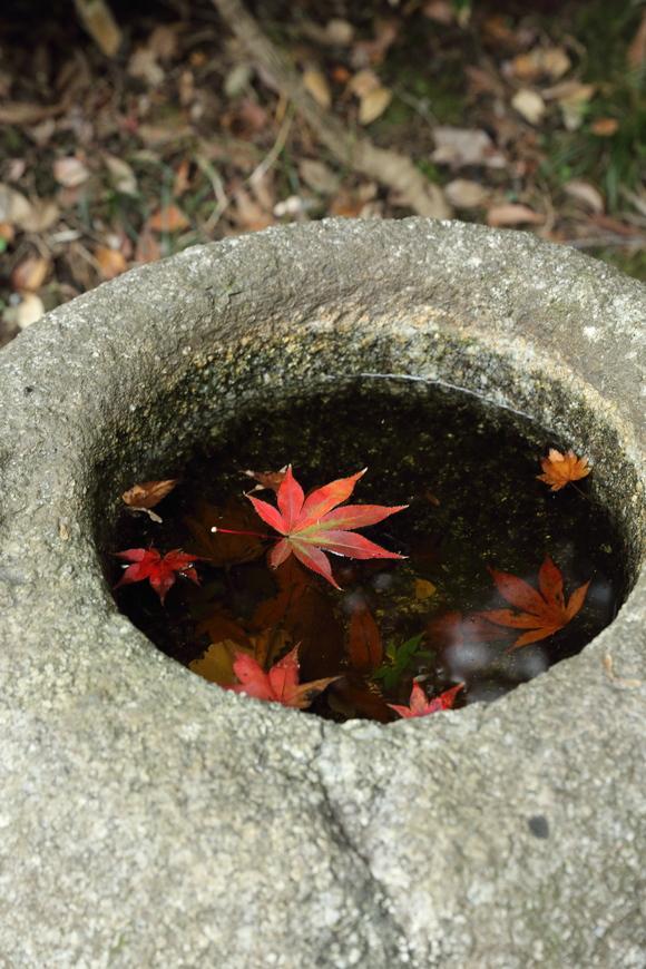 根岸森林公園と三渓園_b0275998_110292.jpg