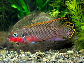 熱帯魚の飼い方_d0163718_2051642.jpg