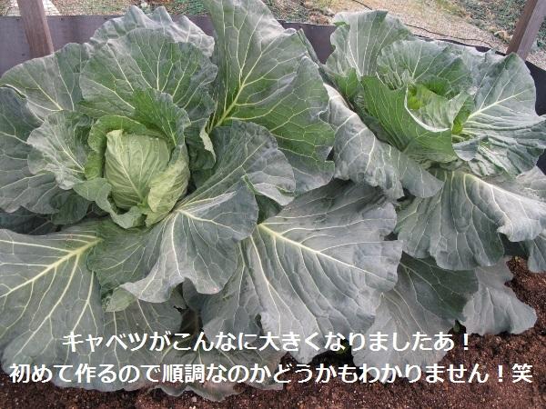 f0143123_10441027.jpg