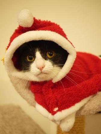 2015年12月13日ゆきねこクリスマスニャーティーゆきねこ雑貨店開催のお知らせ。_a0143140_22381835.jpg