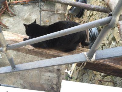 猫達とー_d0136540_3193717.jpg