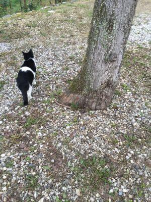 猫達とー_d0136540_3284979.jpg