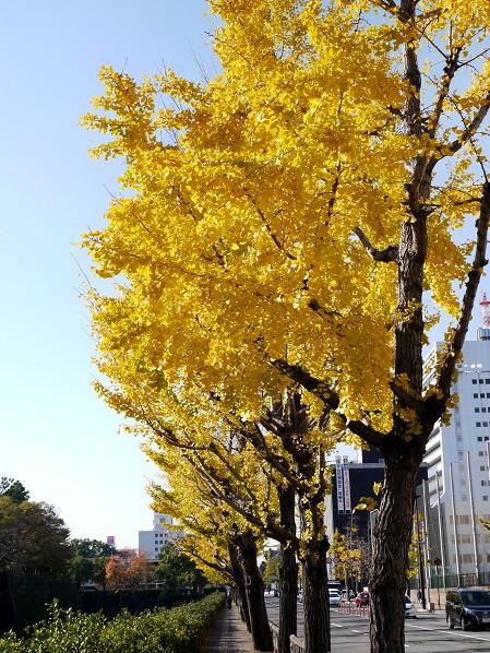 和歌山便り_b0093754_19571445.jpg