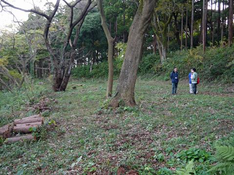 六国見山へ最初に植樹したイロハモミジ色付き始める11・30_c0014967_953786.jpg