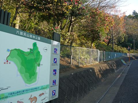 六国見山へ最初に植樹したイロハモミジ色付き始める11・30_c0014967_962039.jpg