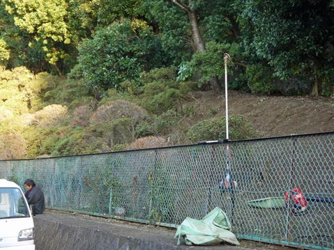 六国見山へ最初に植樹したイロハモミジ色付き始める11・30_c0014967_964213.jpg
