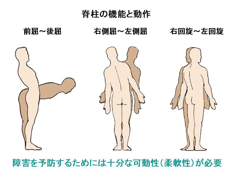 パフォーマンスを高める体幹コンディショニング(体側面)_c0362789_09170879.jpg