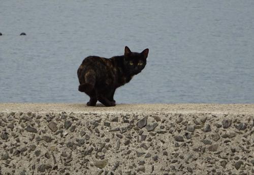 猫のさまざま。(2)_f0166694_19073248.jpg