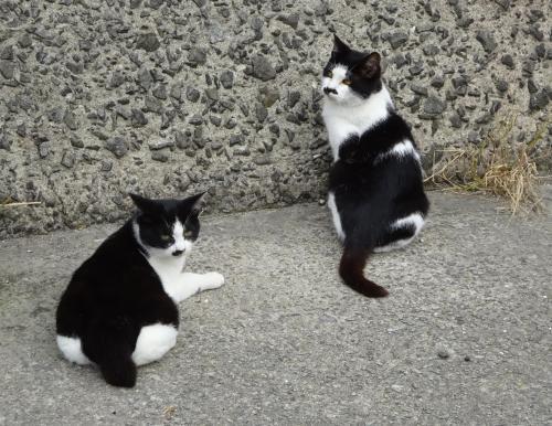 猫のさまざま。(2)_f0166694_19080599.jpg