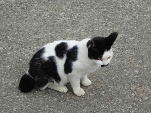 猫のさまざま。(2)_f0166694_19084817.jpg