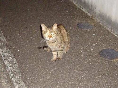 猫のさまざま。(2)_f0166694_19091224.jpg