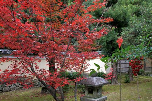 紅葉だより51 鹿王院_e0048413_22153069.jpg