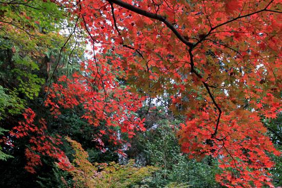 紅葉だより51 鹿王院_e0048413_2216242.jpg
