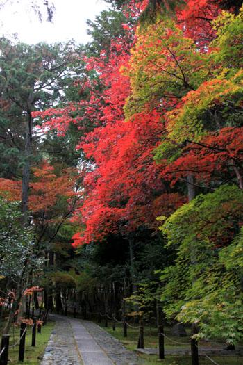 紅葉だより51 鹿王院_e0048413_2216513.jpg