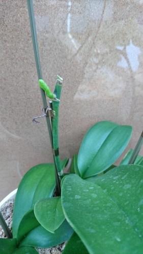 お花たち_f0068517_13161444.jpg