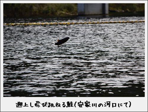 11+11=鮭_c0259934_09084575.jpg