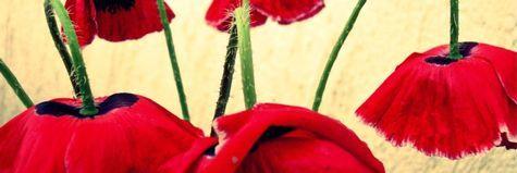 Red in December._e0148852_12433976.jpg