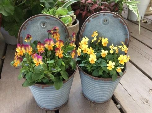 今日のお花の紹介は、デンマークの妖精ニッセにしてもらいましょう_b0137969_04595911.jpg