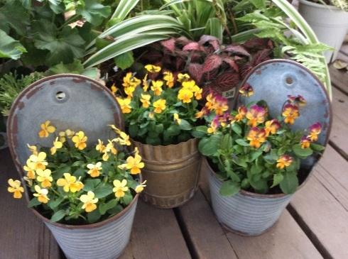 今日のお花の紹介は、デンマークの妖精ニッセにしてもらいましょう_b0137969_05001684.jpg