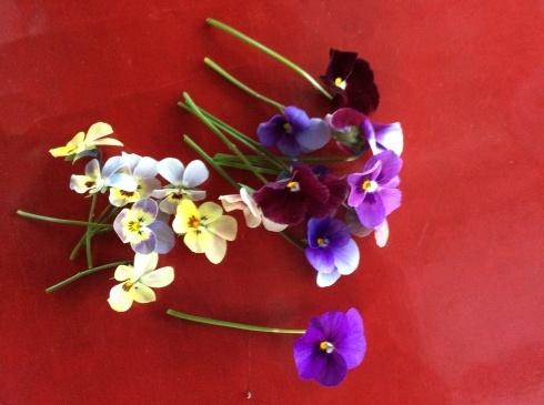 今日のお花の紹介は、デンマークの妖精ニッセにしてもらいましょう_b0137969_05470482.jpg