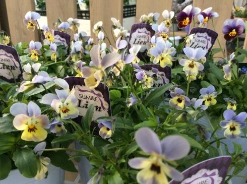 今日のお花の紹介は、デンマークの妖精ニッセにしてもらいましょう_b0137969_05591789.jpg