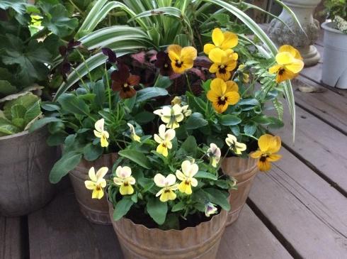今日のお花の紹介は、デンマークの妖精ニッセにしてもらいましょう_b0137969_06011371.jpg