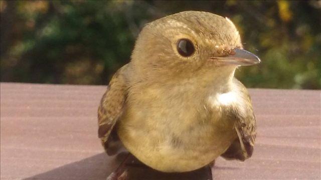 【風水生活】 幸運を運んでくれる鳥_d0037284_015123.jpg