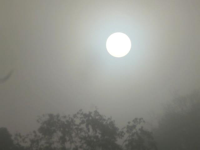 濃霧と初霜の朝_c0165589_22285158.jpg