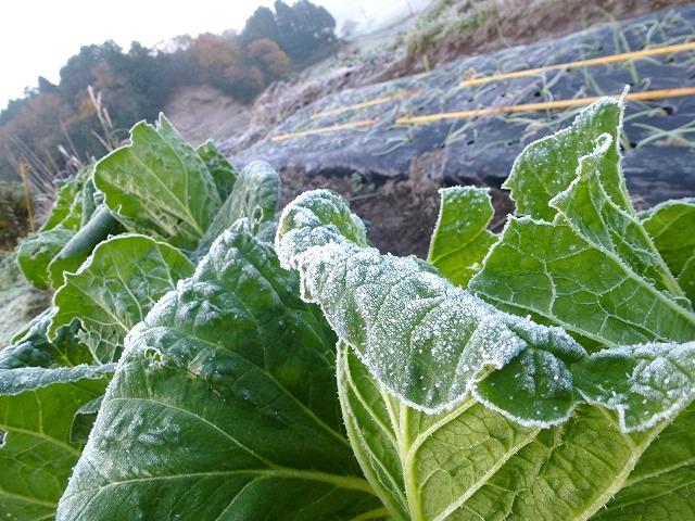 濃霧と初霜の朝_c0165589_22325766.jpg