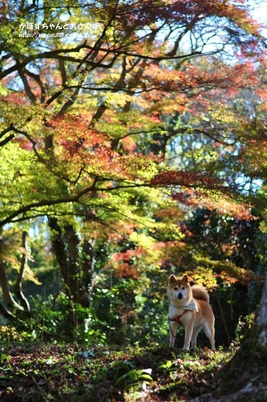 秋の色_a0126590_00572715.jpg