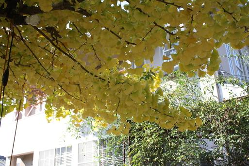 季節の黄色と 季節はずれの黄色_a0155290_11303223.jpg