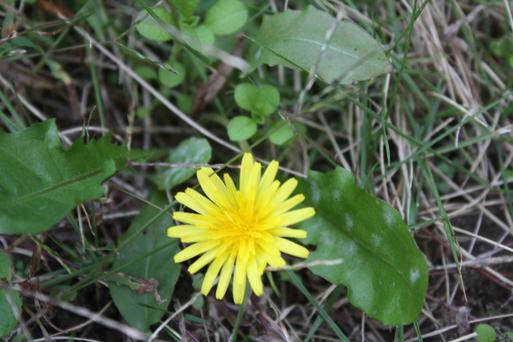 季節の黄色と 季節はずれの黄色_a0155290_1136963.jpg